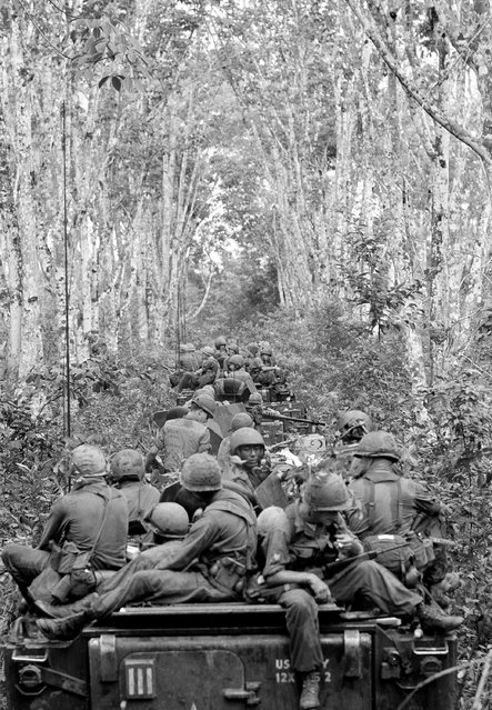 Infantrymen of the U.S. 1st division's 1st brigade aide personnel carriers through an old abandoned rubber plantation in Viet Nam near Tan Uyen on October 7, 1966. The brigade was conducting operation little rock in an area 20 miles North of Saigon. (Photo by AP Photo)