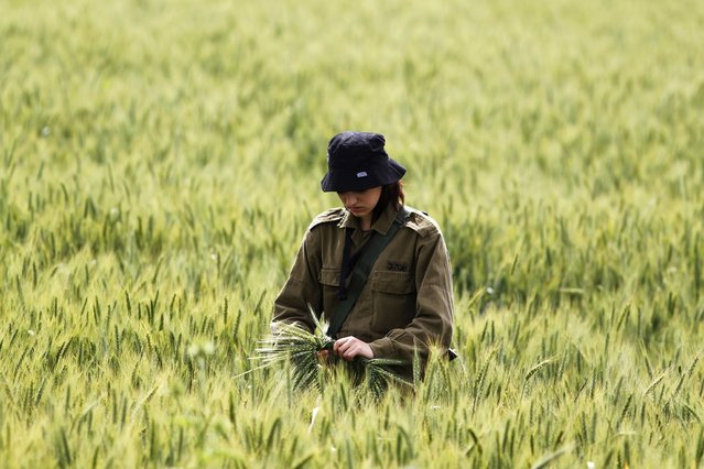 An Israeli soldier collects wheat stalks as her comrades search for remains at the site of a helicopter crash in a field near Kibbutz Revadim in southern Israel March 12, 2013. The Israeli air force helicopter crashed in southern Israel on Tuesday killing its two pilots, the Israeli military said. (Photo by Amir Cohen/Reuters)