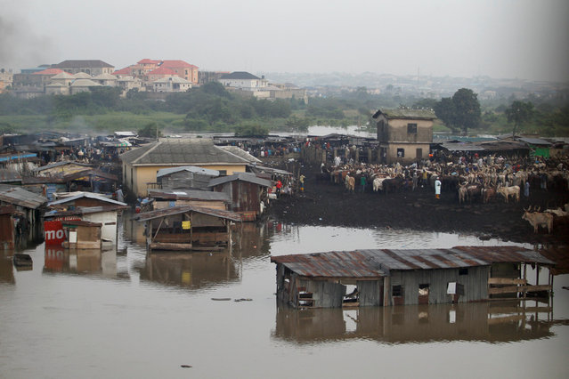 Makeshift stalls are seen submerged along river Ogun as it overflows its bank near a livestock market outside Nigeria's commercial capital Lagos October 6, 2016. (Photo by Akintunde Akinleye/Reuters)