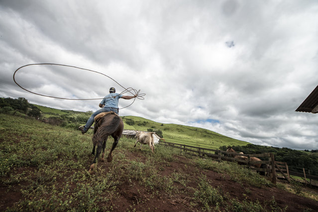 """Gaucho's lasso"". Brazilian Gaucho riding a wild Criollo horse to round lasso bulls. Location: Paranà, Brazil. (Photo and caption by Chris Schmid/National Geographic Traveler Photo Contest)"