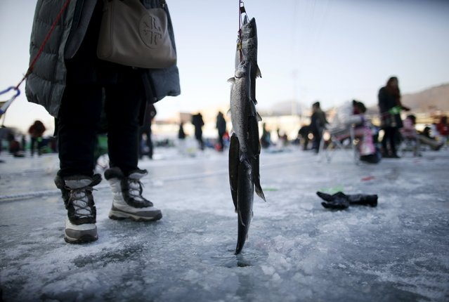 A woman poses for photographs with trout fish on a frozen river in Hwacheon, south of the demilitarized zone (DMZ) separating the two Koreas, January 9, 2016. (Photo by Kim Hong-Ji/Reuters)