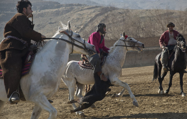 Afghan horse riders compete for the goat during a friendly buzkashi match on the outskirts of Kabul, Afghanistan, Thursday, January 15, 2015. (Photo by Massoud Hossaini/AP Photo)