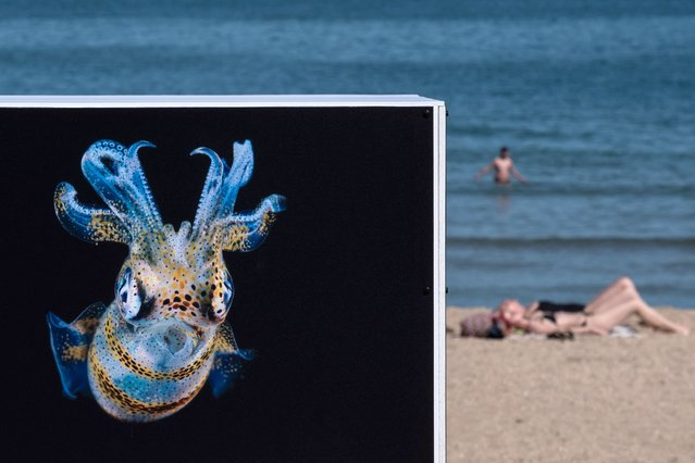 """Sunbathers enjoy the beach next to a photograph by Taiwanese Lynn Wu during the photo festival """"Women Exhibit"""" in Houlgate, north-western France, on June 6, 2021. The 4th edition of the photo festival, entirely dedicated to professional women photographers with 14 open-air exhibitions, takes place from June 1 till August 8, 2021. (Photo by Joel Saget/AFP Photo)"""