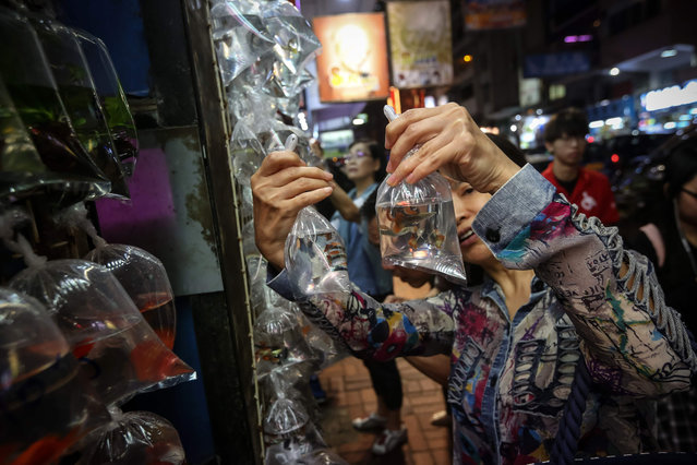 A woman looks at fish for sale at the goldfish market in the Kowloon district in Hong Kong on November 10, 2018. (Photo by Vivek Prakash/AFP Photo)
