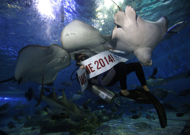 """A professional diver holds a """"Welcome 2014"""" banner while swimming with stingrays as part of a show during New Year celebrations inside a large aquarium at a ocean park in Manila December 31, 2013. (Photo by Romeo Ranoco/Reuters)"""