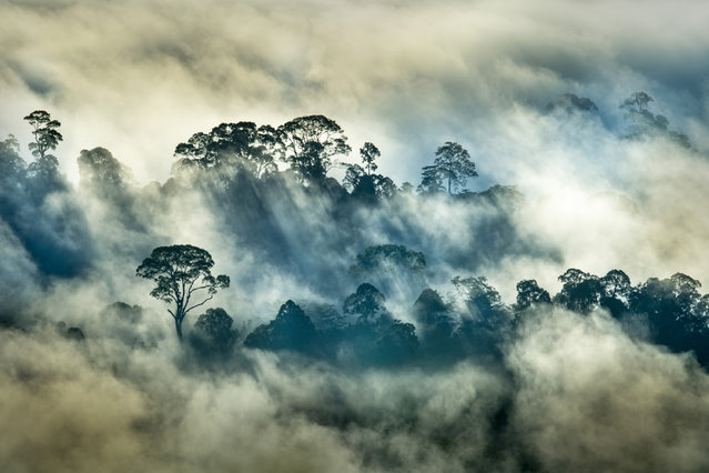 "Landscapes, second place: Florian Smit, ""Rainforest"" (Danum valley, Borneo). (Photo by Florian Smit/2019 GDT Nature Photographer of the Year)"