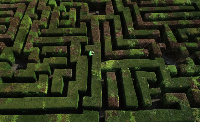 Gardener Eric Drennon tends to the maze at Traquair House in Peeblessshire, Scotland on May 1, 2019. It was planted in 1981 and is the largest hedged maze in Scotland. (Photo by Owen Humphreys/PA Wire Press Association)