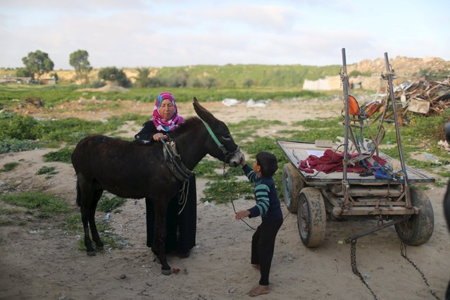 Palestinian woman Jihan Abu Muhsen prepares her donkey with her son Kareem before going work collecting bricks for sale from sites of demolished buildings, at her dwelling in Khan Younis in the southern Gaza Strip March 8, 2016. Abu Muhsen gathers bricks from the sites of demolished buildings and sells them to recycling factories. She earns around 20 shekels ($5) a day and her 10-year-old son Mohammad helps her when he is not at school. (Photo by Ibraheem Abu Mustafa/Reuters)