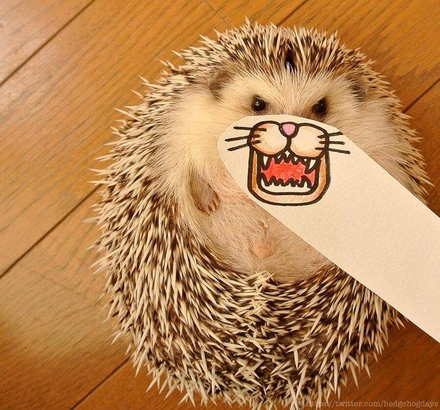 Marutaro The Hedgehog Part 2
