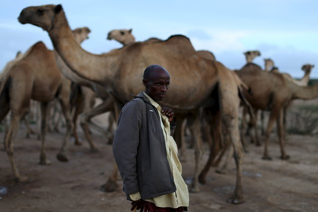 A camel herder stands near camels close to the town of Borama, Somaliland April 16, 2016. (Photo by Siegfried Modola/Reuters)