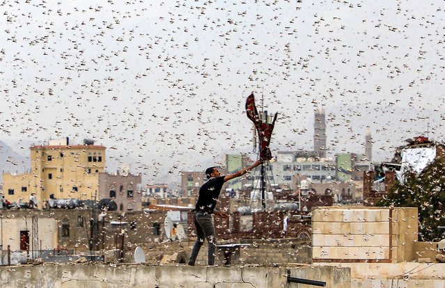 A man tries to catch locusts while standing on a rooftop as they swarm over the Huthi rebel-held Yemeni capital Sanaa on July 28, 2019. (Photo by Mohammed Huwais/AFP Photo)
