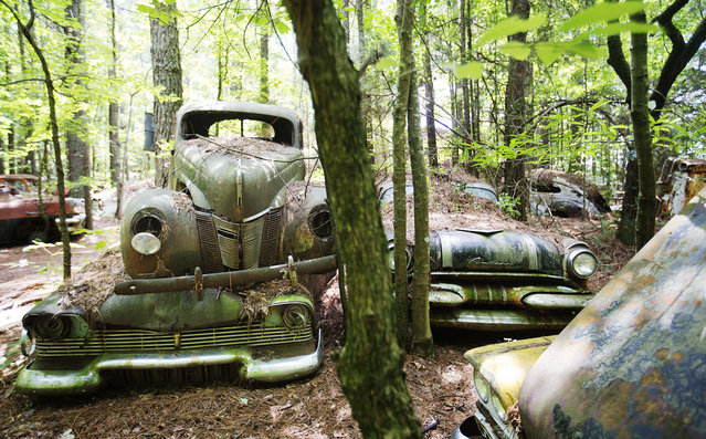 """Cars sit stacked at Old Car City, the world's largest known classic car junkyard Thursday, July 16, 2015, in White, Ga. """"The only thing I ever knew was cars and trucks"""", owner Walter Dean Lewis said, who acquired over 4,000 classic cars which are displayed amongst 32 acres of forest. (Photo by David Goldman/AP Photo)"""