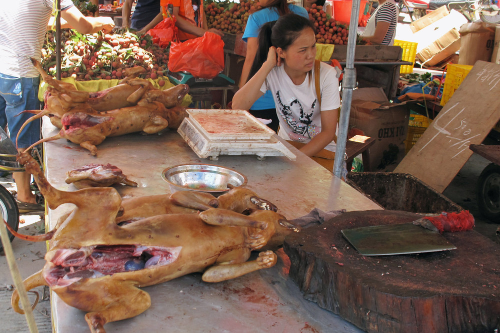 Dog-Meat Eating Festival in China