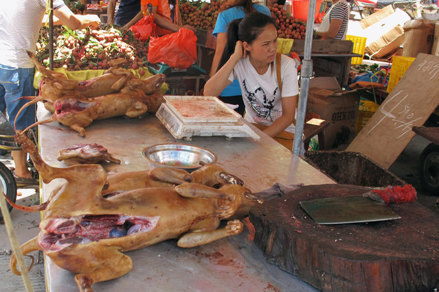 Butchered dogs are seen on sale at a stall inside a meat market during the local dog meat festival, in Yulin, Guangxi Zhuang Autonomous Region, China, June 21, 2016. (Photo by James Pomfret/Reuters)