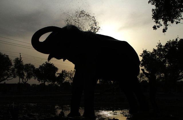 An Indian mahout bathes his elephant on a hot summer day in Allahabad, India, on June 18, 2012. Northern India has been sweltering under extreme heat as maximum temperatures hovered around 45 degrees Celsius (113F) in some areas. (Photo by Rajesh Kumar Singh/AP Photo)