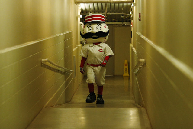 Cincinnati Reds mascot Mr. Redlegs walks up the tunnel from the field as rain delays the start of the game against the Chicago Cubs at Great American Ball Park on April 29, 2014 in Cincinnati, Ohio. (Photo by Joe Robbins/Getty Images)