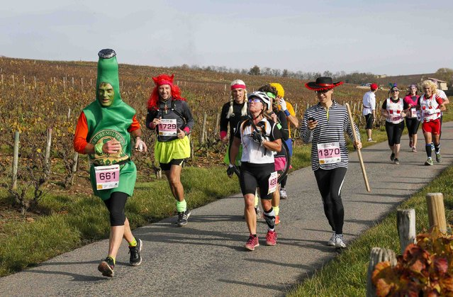 Costumed competitors run along the vineyard during the Marathon International du Beaujolais race in Cercie, November 22, 2014. (Photo by Robert Pratta/Reuters)