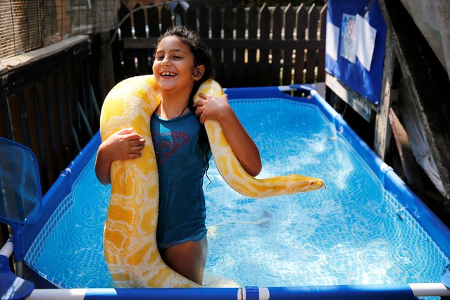 Inbar Regev, an eight-year-old Israeli girl, holds her pet python while swimming in her backyard pool in Ge'a, southern Israel on October 7, 2020. (Photo by Amir Cohen/Reuters)