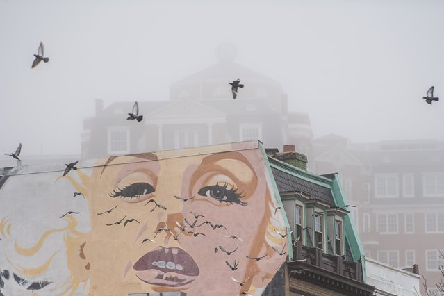 Pigeons fly off the top of a Connecticut Avenue building adorned with a mural of Marilyn Monroe during a foggy morning in Washington on February 24, 2018. (Photo by Salwan Georges/The Washington Post)