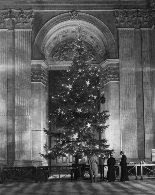 The Christmas tree in St Paul's Cathedral, London, which was brought from the royal estates at Windsor, 19th December 1950. (Photo by Fox Photos/Getty Images)