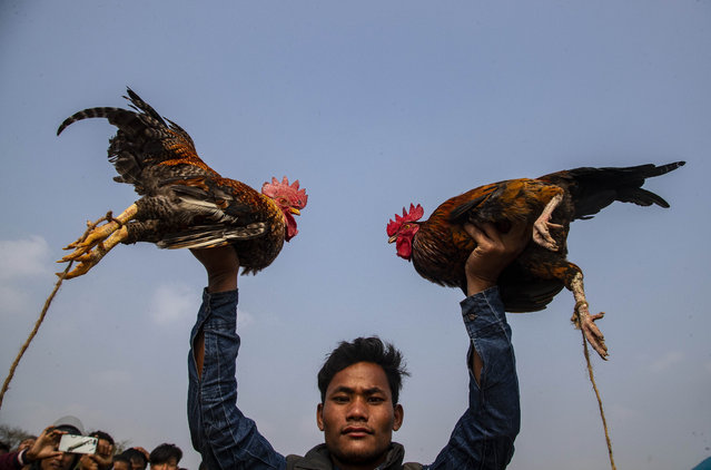 A boy holds up roosters before releasing them to fight during Jonbeel festival near Jagiroad, about 75 kilometers (47 miles) east of Gauhati, India, Friday, January 22, 2021. Tribal communities like Tiwa, Karbi, Khasi, and Jaintia from nearby hills participate in large numbers in this festival, that signifies harmony and brotherhood amongst various tribes and communities, and exchange goods through an established barter system. (Photo by Anupam Nath/AP Photo)