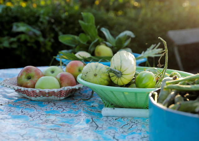Vegetables and fruit are lie on a table at Lena Israelsson's allotment garden in Stockholm, Sweden, September 30, 2016. (Photo by Maxim Shemetov/Reuters)