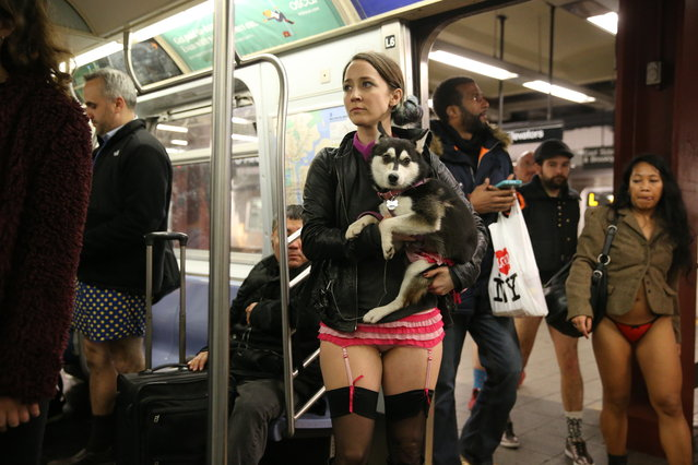 A young woman participating in the No Pants Subway Ride holds her dog who is wearing matching underwear, on the subway in New York City, Sunday, January 10, 2016. (Photo by Gordon Donovan/Yahoo News)