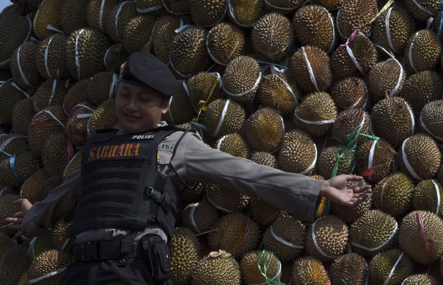A police poses on the durians during festival durian on the giant mount of durian at northern slopes of Mount Arjuna in East Java. (Photo by Sigit Pamungkas/JG Photo)