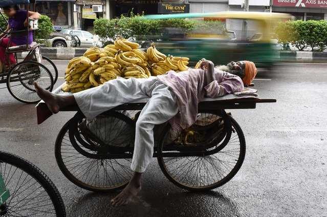 An Indian street vendor selling bananas naps on his fruit cart at the roadside in New Delhi on June 3, 2015. (Photo by Money Sharma/AFP Photo)