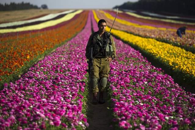 An Israeli soldier stands in a buttercup flower field near Kibbutz Nir Yitzhak in southern Israel, just outside the Gaza Strip April 19, 2015. (Photo by Amir Cohen/Reuters)