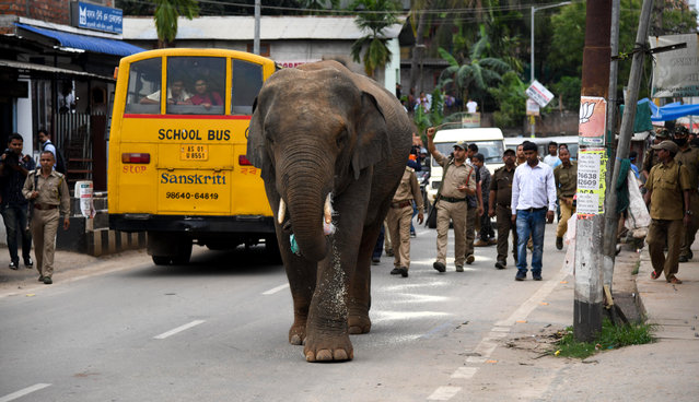 Indian forest officials and police personnel try to chase away a wild male elephant at Hengrabari area in Guwahati on April 30, 2019. The elephant came down from Amchang Wildlife Sanctuary in search of food and later forest official tranquillized it, local media reported. As the pressure of population pushes human habitation closer to forests incidents of wild animals straying into cities is increasingly reported. (Photo by Biju Boro/AFP Photo)