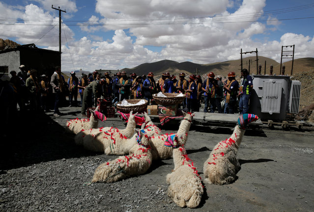 "Llamas sit as independent miners bless the mine by offering animal sacrifice as part of Andean carnival celebrations, outside the Mina Itos on the outskirts of Oruro, Bolivia, February 24, 2017. In the mines of highland Bolivia, ""El Tío"" is the familiar name for the spirit owner of the mountain, who is also known as Huari or Supay. He is closely related to similar figures found in mines in Peru called ""muqui"". The words ""El Tío"" are Spanish for ""the uncle"" and evince the relationship of patronage that the miners have with the spirit. He is associated with pre-Hispanic huacas as well as the Christian Devil and is a central figure in the ritual life of Bolivian mining communities. An icon of the Tío is situated in each mineshaft to receive sacrificial offerings of alcohol, coca, cigarettes, llama blood and other ritual items from the miners in return for his goodwill and his guarantee of good health and good fortune in the mines. These rites of sacrifice to the spirit owner of the mines reflect both the pre-Columbian system of reciprocity and the relations of patronage that have come down from Spanish colonial society. In the pre-Columbian Andean world view, the huacas (deities) that were embodied in natural landmarks were an important part of the social landscape (Photo by David Mercado/Reuters)"
