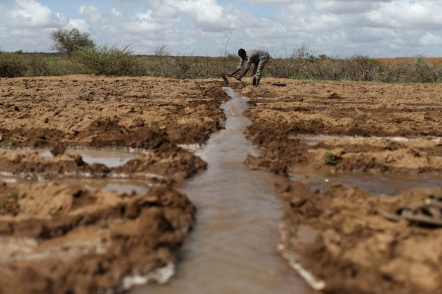 A farmer works in an irrigated field near the village of Botor, Somaliland April 16, 2016. (Photo by Siegfried Modola/Reuters)