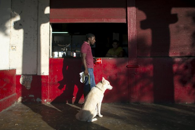 """Soldier Ariel Rodriguez, 20, together with his 2-year-old dog called """"Donut"""", buys salt at a subsidised state store, or """"bodega"""", where Cubans can buy basic products with a ration book they receive annually from the government, in Havana, May 6, 2015. (Photo by Alexandre Meneghini/Reuters)"""