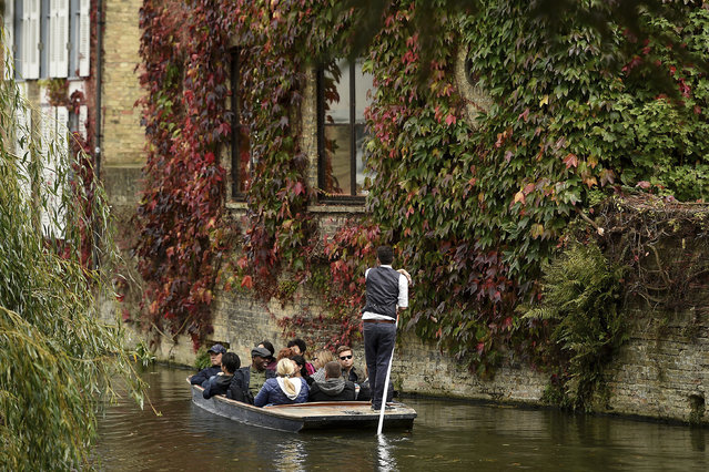 Tourists in a punt pass walls adorned with a Virginia creeper/American ivy (Parthenocissus quinquefolia) turning to it's Autumn colours on the River Cam in Cambridge, England, Saturday October 7, 2017. (Photo by Joe Giddens/PA Wire via AP Photo)
