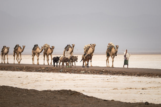 Miners with their camels and donkeys. (Photo by Joel Santos/Barcroft Images)