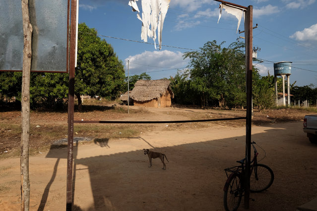 A dog lingers on the street in Araribóia Indigenous Reserve, Maranhão, Brazil on August 7, 2015. (Photo by Bonnie Jo Mount/The Washington Post)