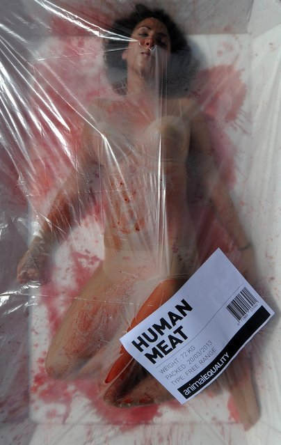 "An activist from the animal rights group ""Animal Equality"" poses in a giant meat packaging tray at the Cathedral square in Barcelona on March 20, 2013 during an event to mark global meat-free day. (Photo by Lluis Gene/AFP Photo)"