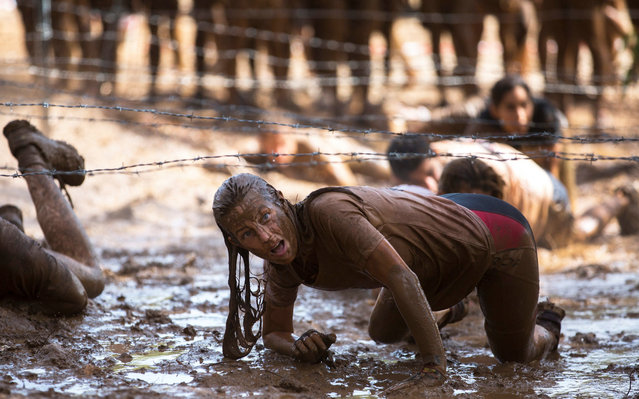 An Israeli woman scrambles through the mud and under barbed wire at the competition of the Legion Run in the Menara Cliffs area of Kiryat Shmona, in northern Israel, near the Lebanon border 14 October 2016. Hundreds of participants ran five kilometers cross country in steep terrain and then navigated various obstacle courses including steep inclines and mud holes. It is the first time this non-competitive but supportive sporting event is held in Israel. (Photo by Jim Hollander/EPA)