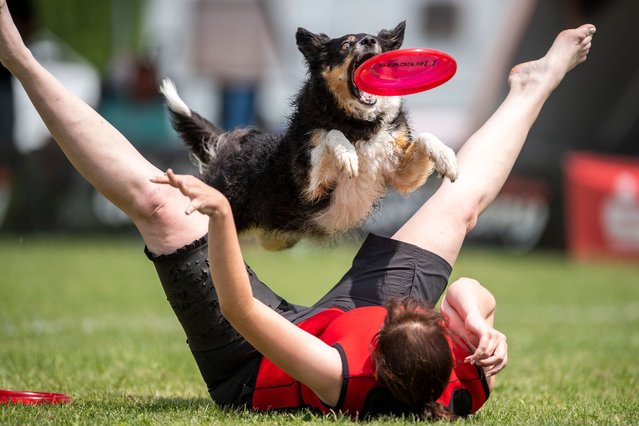 A participant and his dog compete in the freestyle event at a Dogfrisbee tournament on June 3, 2018 in Erftstadt, Germany. (Photo by Marius Becker/AFP Photo/DPA)