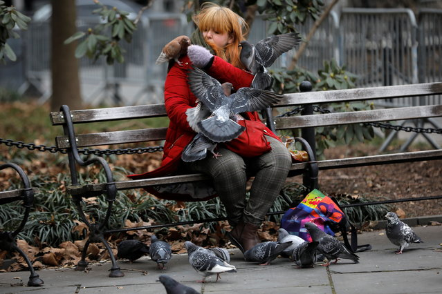 A woman feeds pigeons as she sits on a bench in City Hall Park in lower Manhattan in New York City, New York, U.S., January 11, 2021. (Photo by Mike Segar/Reuters)