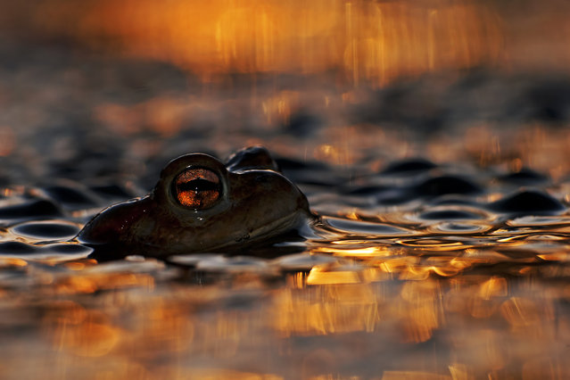 """Eye of a toad"". Animal Portraits, Łukasz Bożycki, Poland.  (Photo by Łukasz Bożycki)"