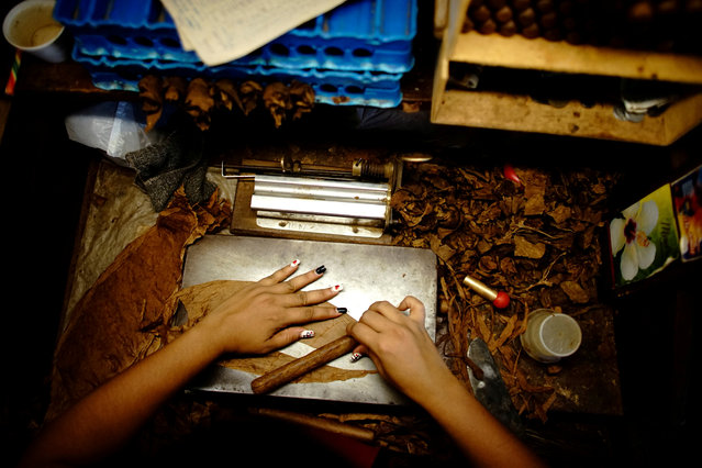An employee rolls tobacco as she listens to fabric reader Francisco Gonzalez (not pictured) at a tobacco factory in Quivican, Cuba on October 3, 2018. (Photo by Alexandre Meneghini/Reuters)