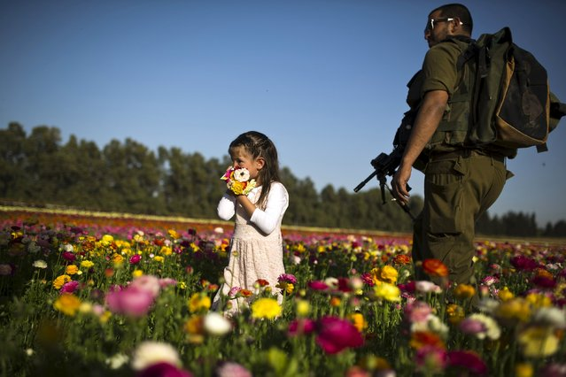 An Israeli girl stands next to a soldier in a buttercup flower field near Kibbutz Nir Yitzhak in southern Israel, just outside the Gaza Strip April 19, 2015. (Photo by Amir Cohen/Reuters)