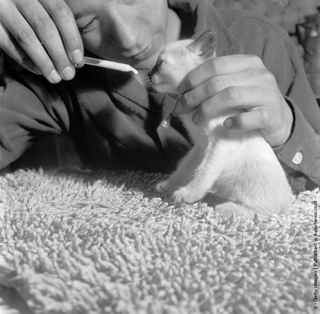 A kitten being fed by its owner from a pipette filled with milk