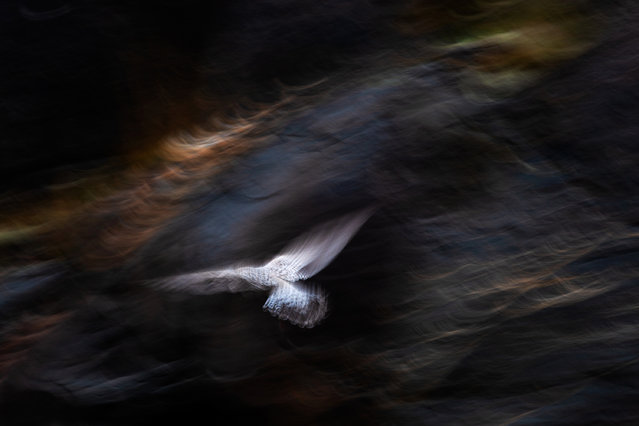 """Nature's studio, second place: Jan van der Greef, """"Gull and light"""". (Photo by Jan van der Greef/2019 GDT Nature Photographer of the Year)"""