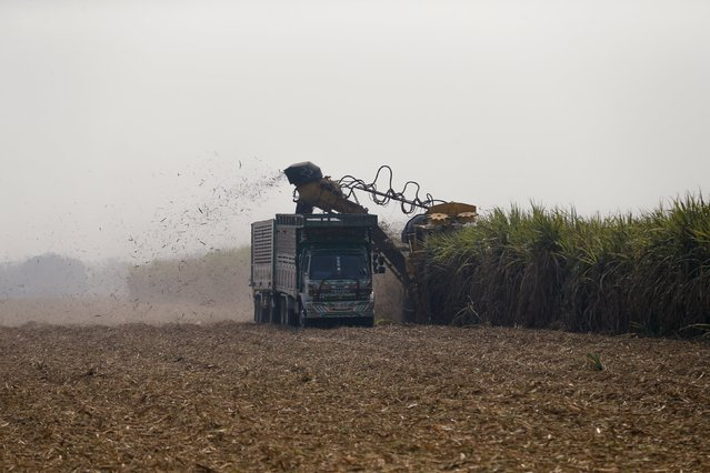 A truck and a tractor harvest sugar cane in a field at Pakchong district in Ratchaburi province, Thailand March 22, 2016. (Photo by Jorge Silva/Reuters)