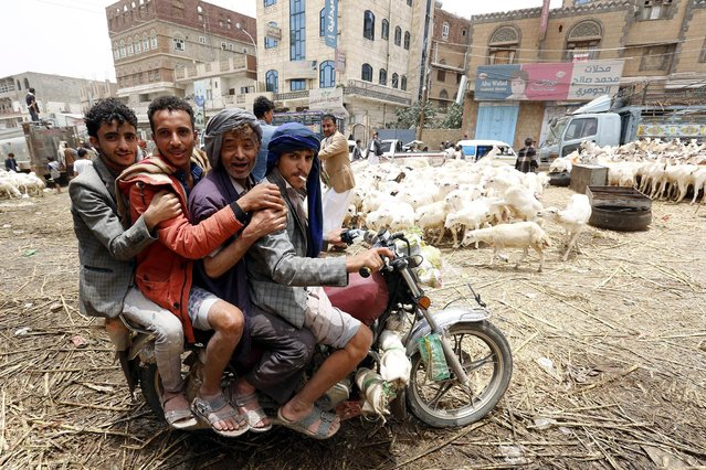 Four men ride a motorbike past sacrificial animals displayed for sale ahead of the Eid al-Adha festival at a livestock market in Sana'a, Yemen, 08 August 2019. Eid al-Adha is the holiest of the two Muslims holidays celebrated each year; it marks the yearly Muslim pilgrimage (Hajj) to visit Mecca, Islam's holiest place. Muslims slaughter a sacrificial animal and split the meat into three parts: one for family, one for friends and relatives, and one for the poor and needy. (Photo by Yahya Arhab/EPA/EFE)