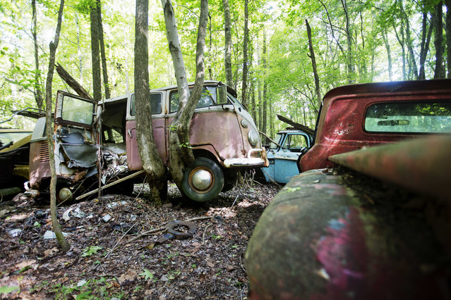 A tree grows under a Volkswagen Camper van lifting it off the ground as it sits at Old Car City, the world's largest known classic car junkyard Thursday, July 16, 2015, in White, Ga. (Photo by David Goldman/AP Photo)