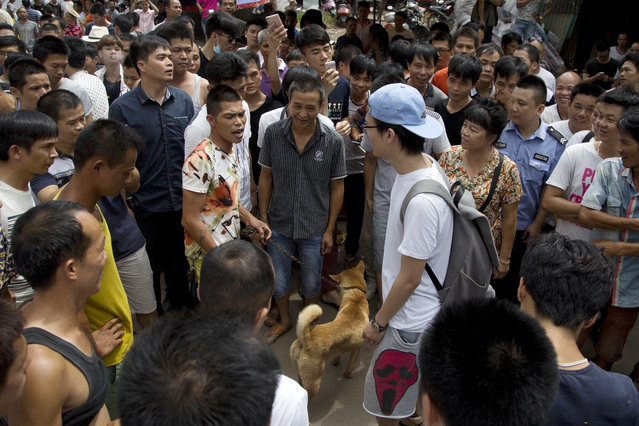 A dog lover activist, in blue hat, is confronted by dog sellers and local people as he is urged to leave the market during a dog meat festival in Yulin in south China's Guangxi Zhuang Autonomous Region, Tuesday, June 21, 2016. (Photo by Andy Wong/AP Photo)